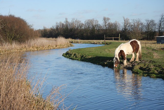 horse_drinking_at_quy_water_-_geograph-org-uk_-_675317